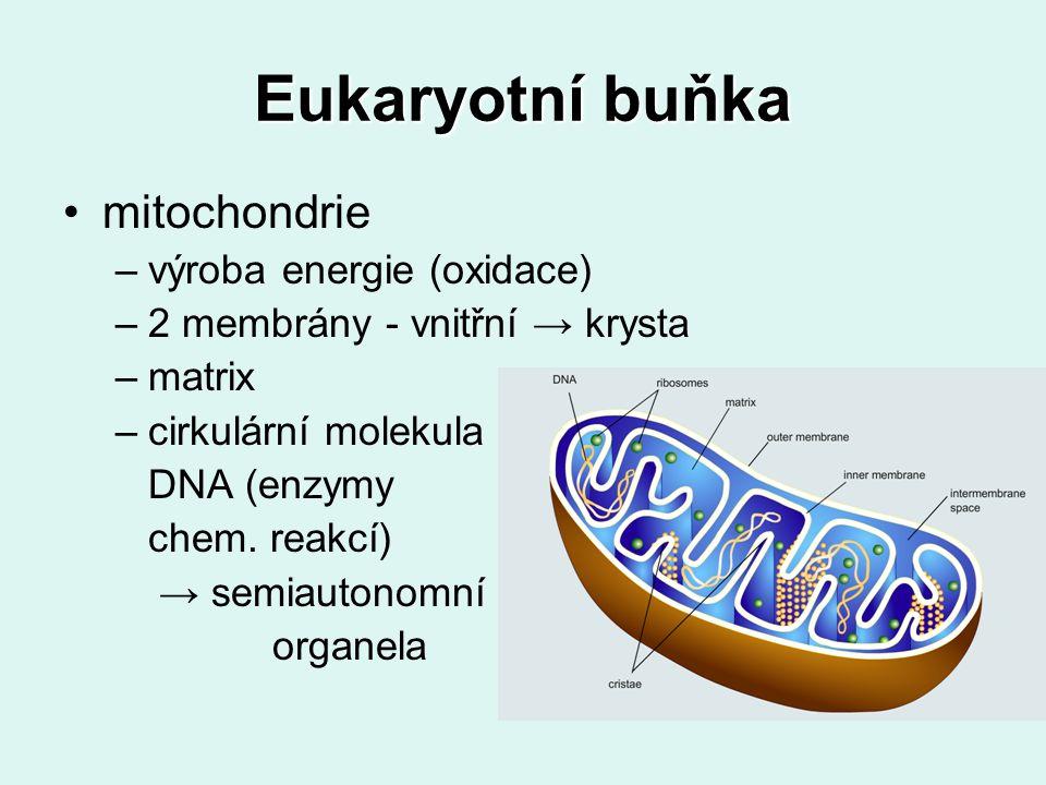 Eukaryotní buňka mitochondrie výroba energie (oxidace)