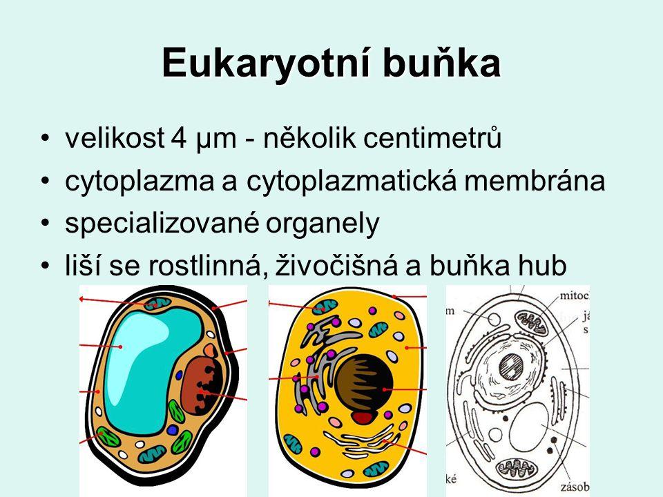 Eukaryotní buňka velikost 4 μm - několik centimetrů