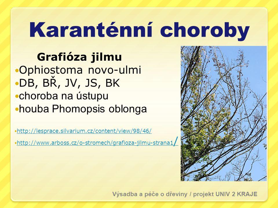 Karanténní choroby Grafióza jilmu Ophiostoma novo-ulmi