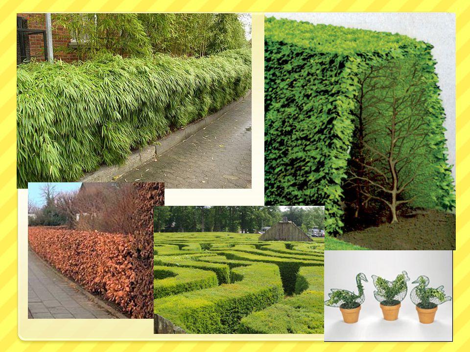 Výsadba a péče o dřeviny / projekt UNIV 2 KRAJE
