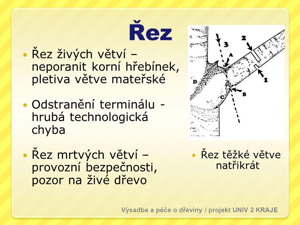 Řez Řez živých větví – neporanit korní hřebínek, pletiva větve mateřské. Odstranění terminálu - hrubá technologická chyba.
