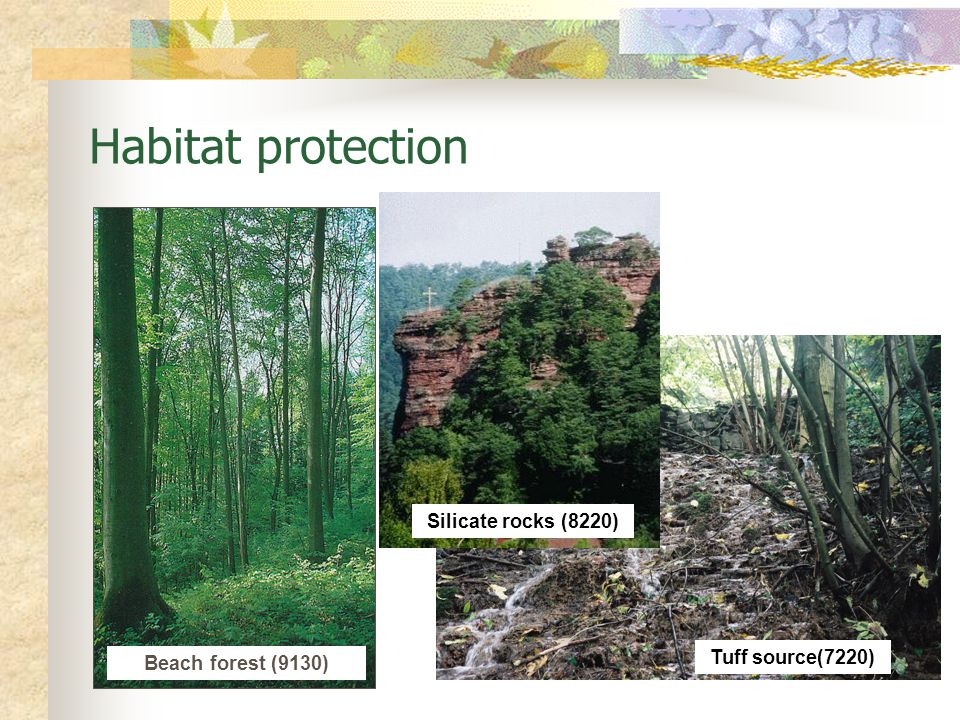 Habitat protection Silicate rocks (8220) Tuff source(7220)