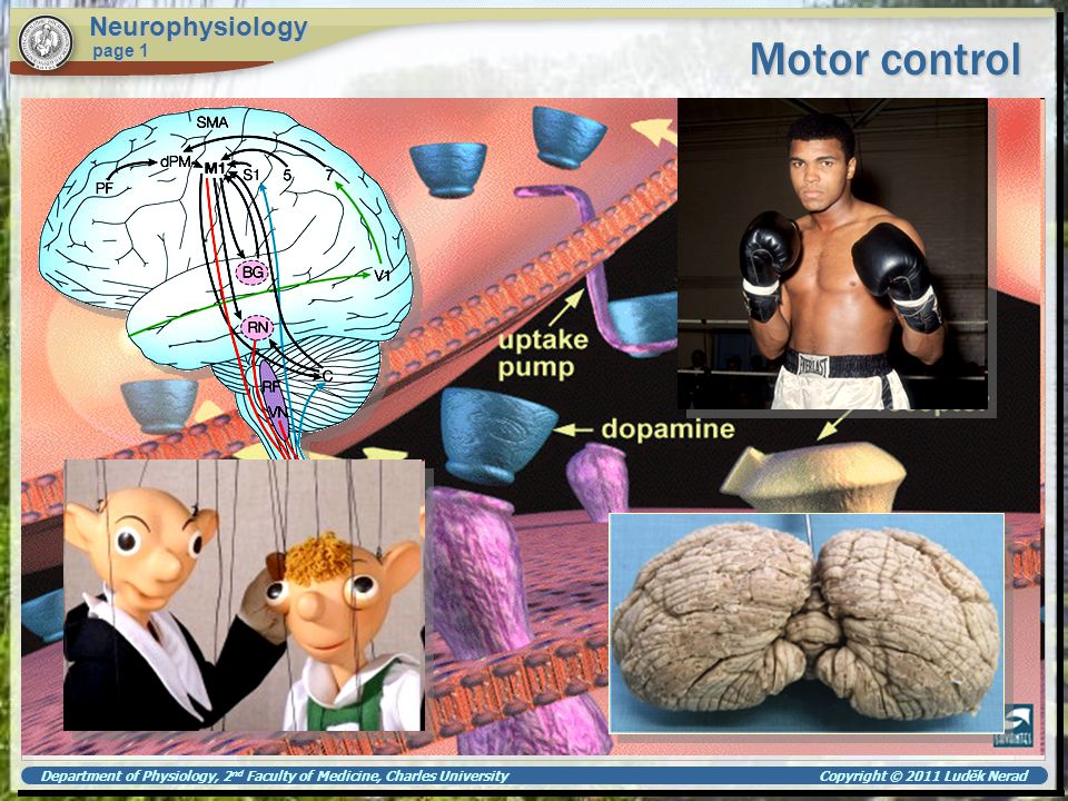 Motor control Neurophysiology page 1