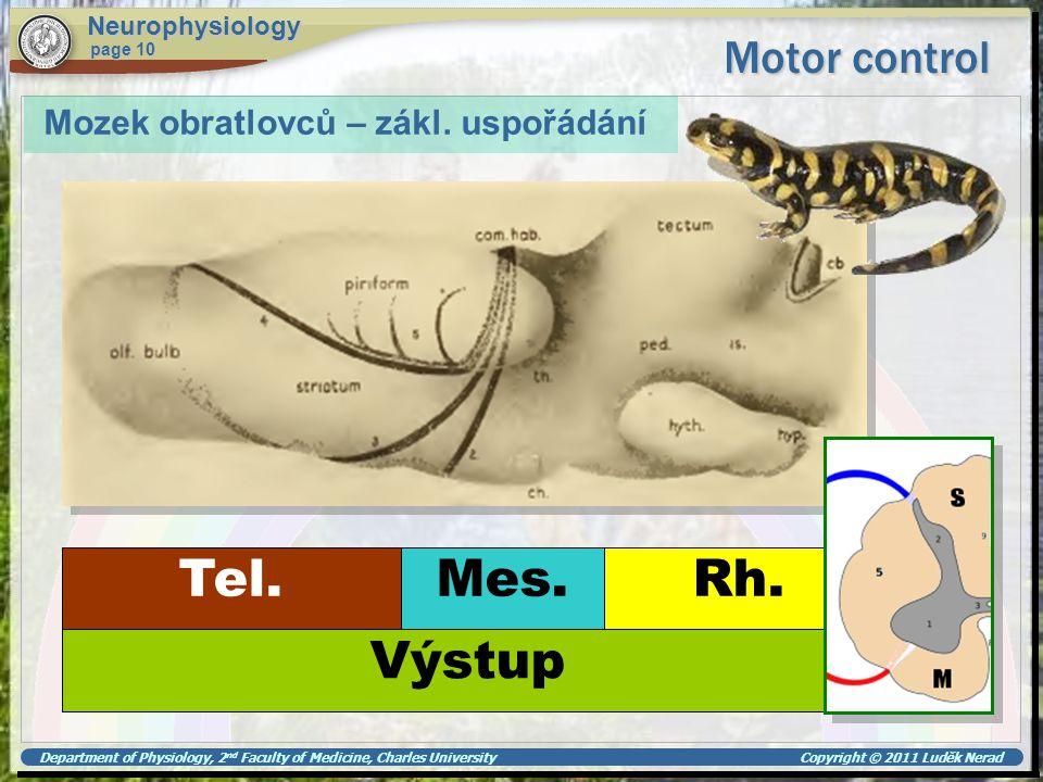 Tel. Mes. Rh. Výstup Motor control Mozek obratlovců – zákl. uspořádání