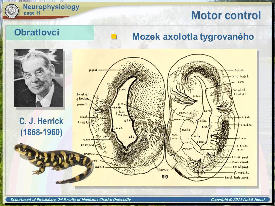 Motor control Obratlovci Mozek axolotla tygrovaného C. J. Herrick