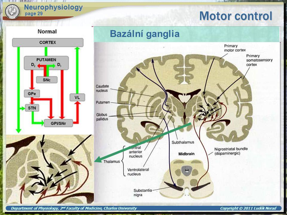 Motor control Bazální ganglia Neurophysiology page 29
