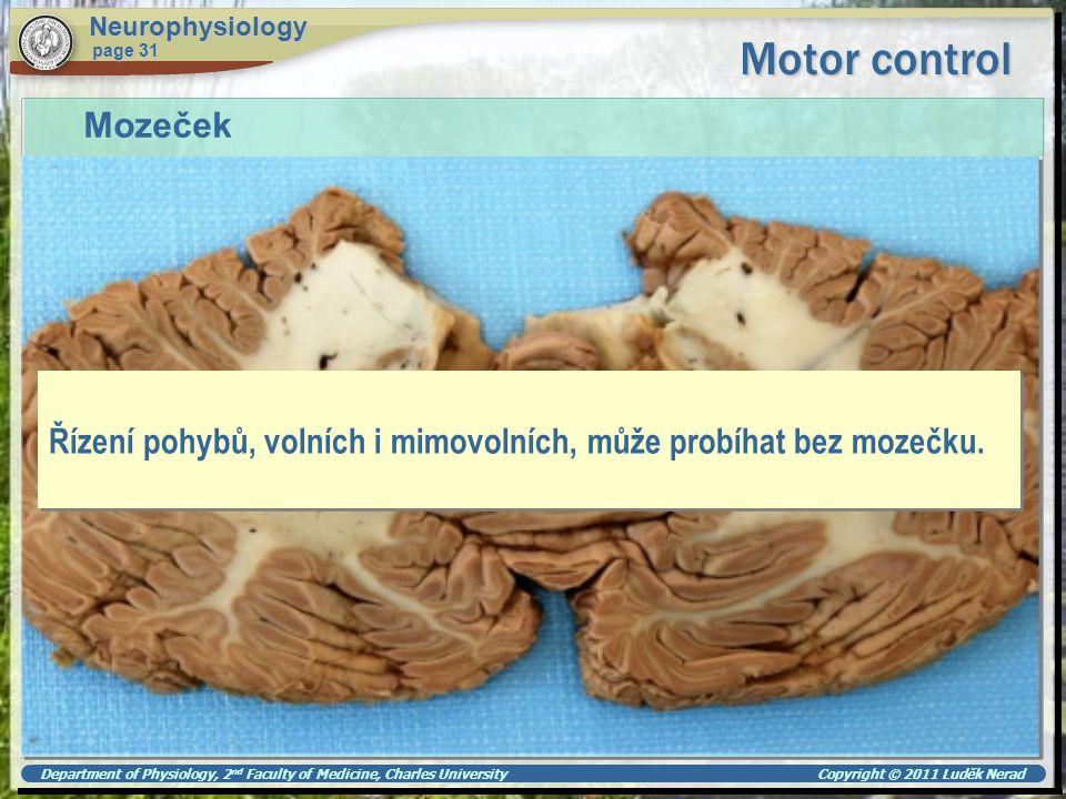 Neurophysiology Motor control. page 31. Mozeček. Řízení pohybů, volních i mimovolních, může probíhat bez mozečku.