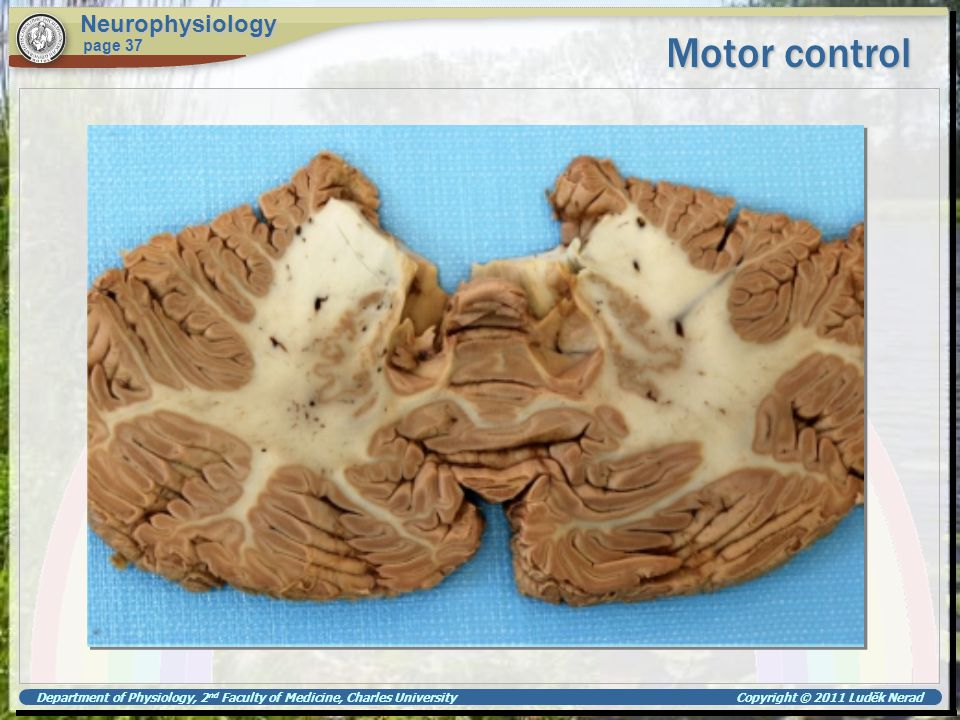 Motor control Neurophysiology page 37