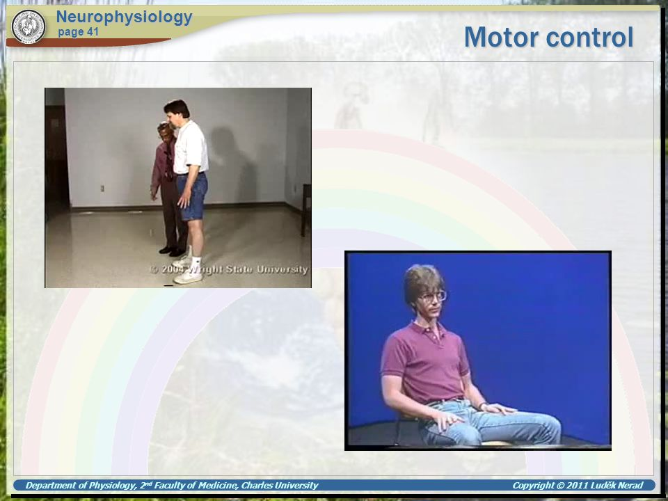 Motor control Neurophysiology page 41