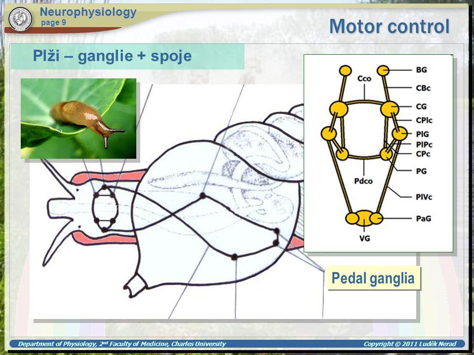 Motor control Plži – ganglie + spoje Pedal ganglia Neurophysiology