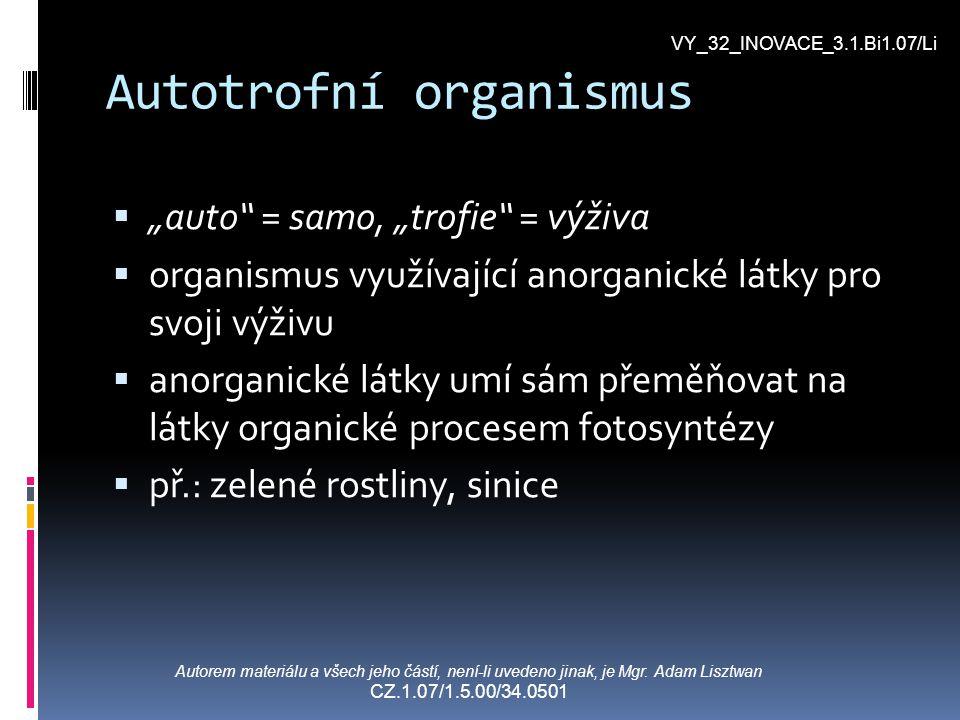 Autotrofní organismus