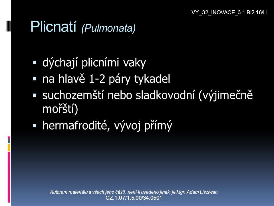 Plicnatí (Pulmonata) dýchají plicními vaky na hlavě 1-2 páry tykadel