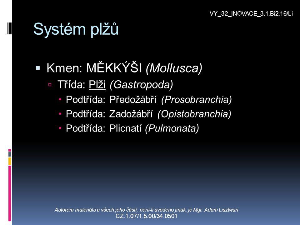Systém plžů Kmen: MĚKKÝŠI (Mollusca) Třída: Plži (Gastropoda)