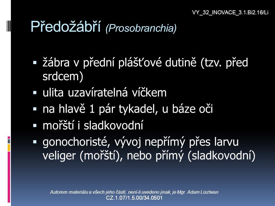Předožábří (Prosobranchia)