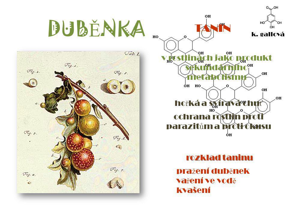 DUBĚNKA TANIN v rostlinách jako produkt sekundárního metabolismu