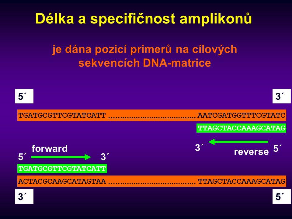 Délka a specifičnost amplikonů