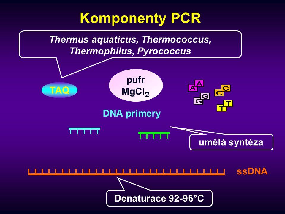 Thermus aquaticus, Thermococcus, Thermophilus, Pyrococcus