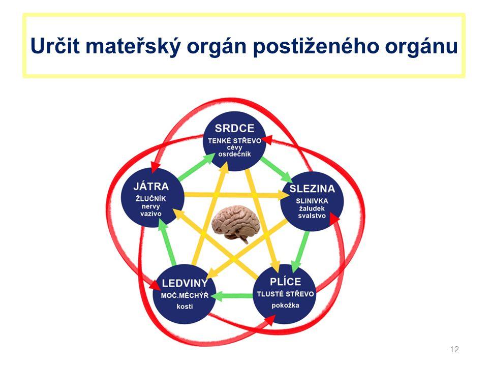 Určit mateřský orgán postiženého orgánu