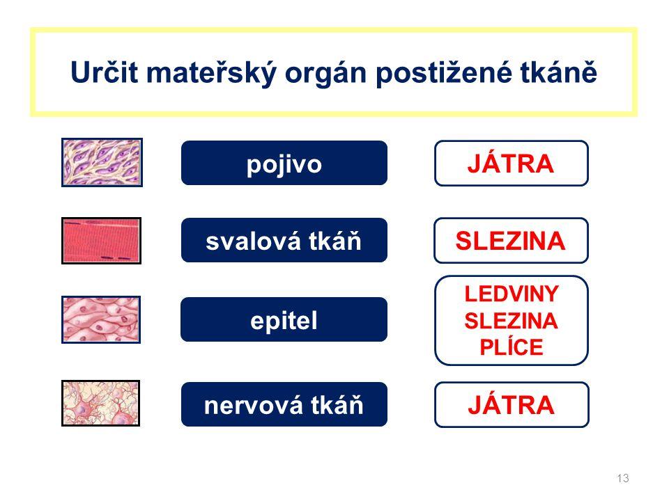 Určit mateřský orgán postižené tkáně