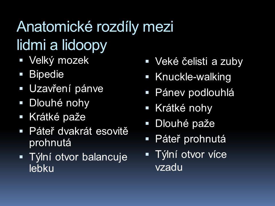 Anatomické rozdíly mezi lidmi a lidoopy