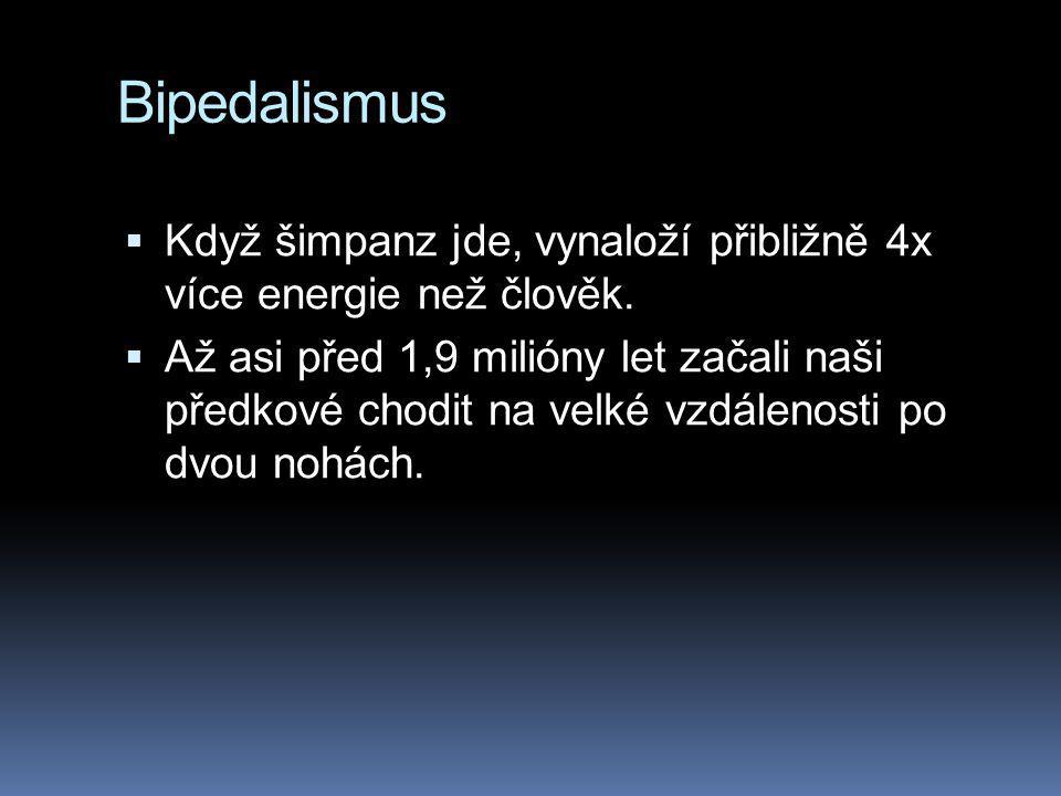 Bipedalismus Když šimpanz jde, vynaloží přibližně 4x více energie než člověk.