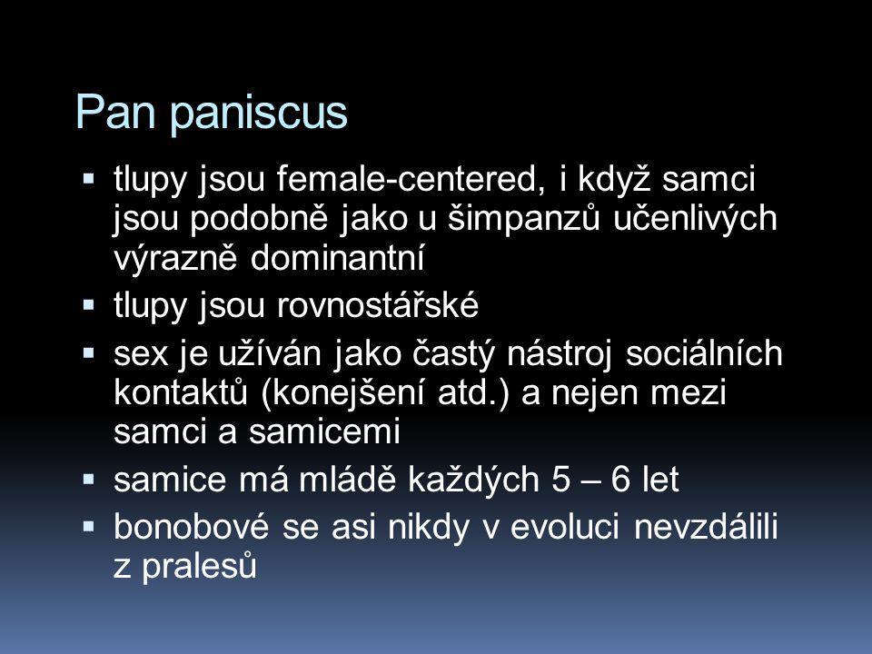 Pan paniscus tlupy jsou female-centered, i když samci jsou podobně jako u šimpanzů učenlivých výrazně dominantní.