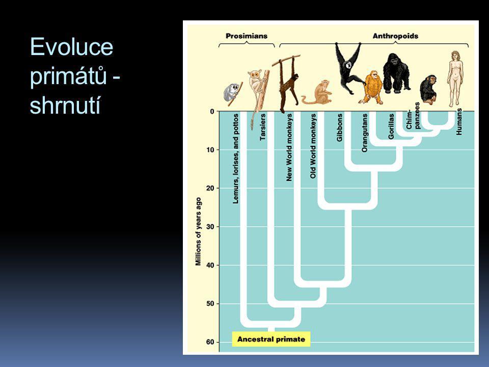 Evoluce primátů - shrnutí