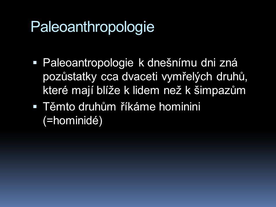 Paleoanthropologie Paleoantropologie k dnešnímu dni zná pozůstatky cca dvaceti vymřelých druhů, které mají blíže k lidem než k šimpazům.
