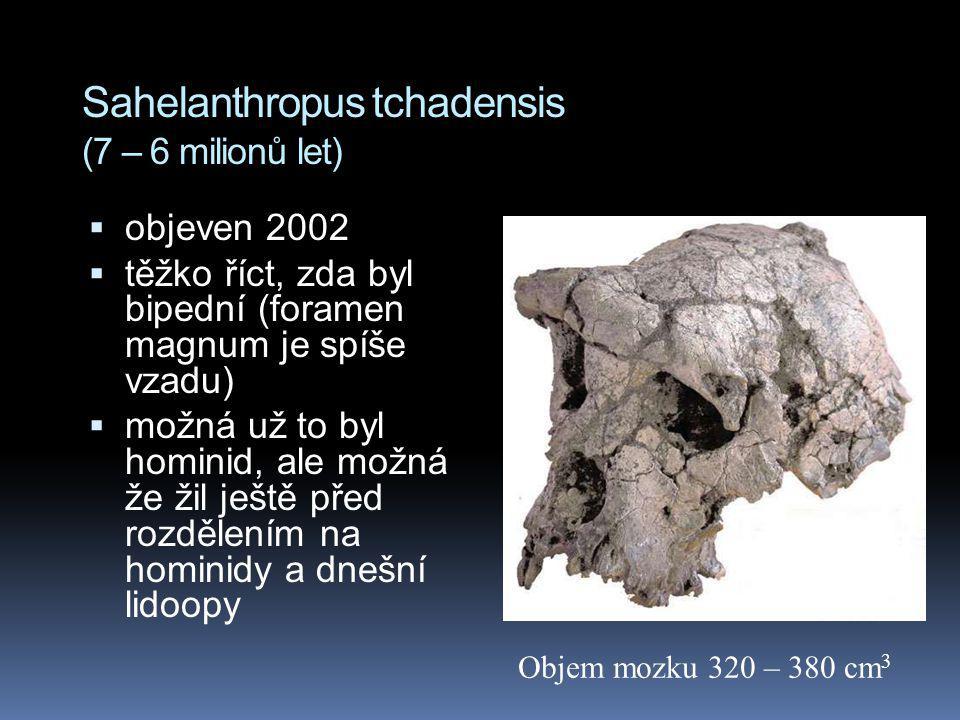Sahelanthropus tchadensis (7 – 6 milionů let)