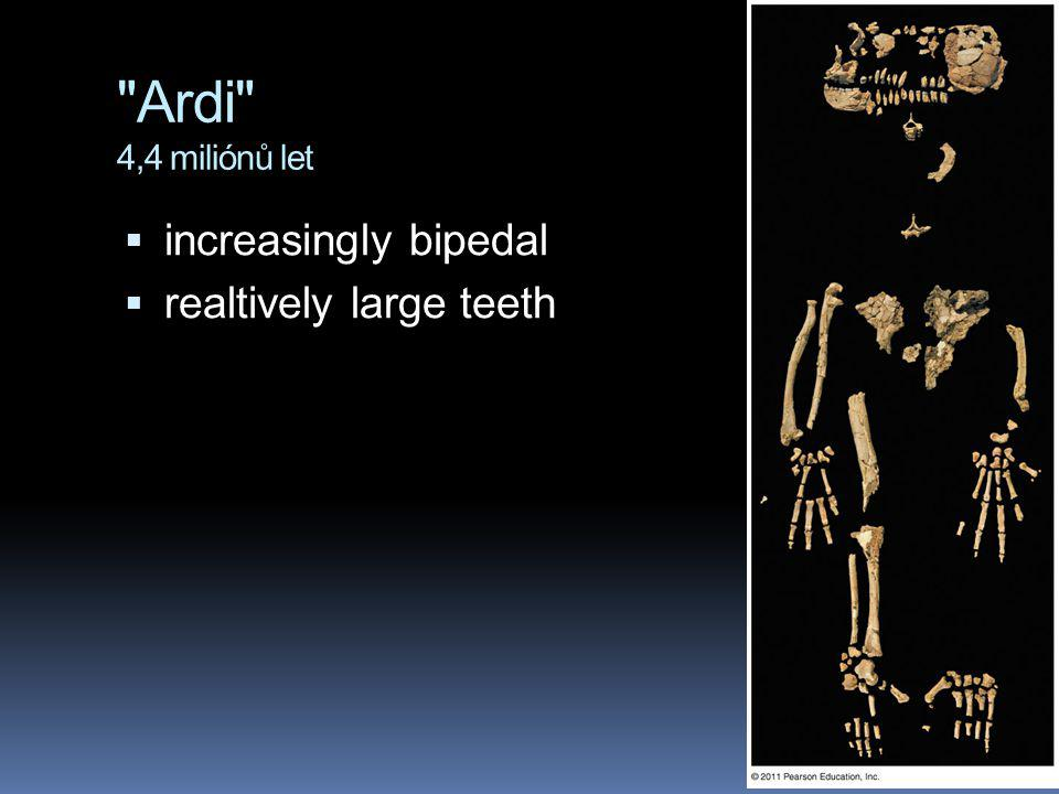 Ardi 4,4 miliónů let increasingly bipedal realtively large teeth