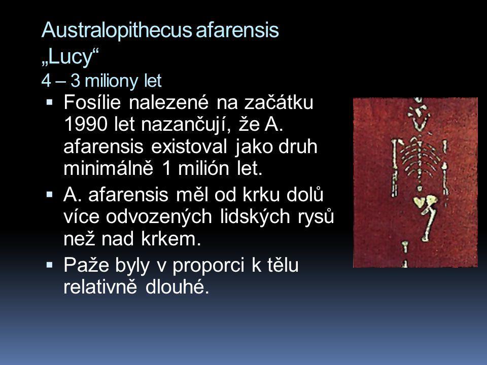 "Australopithecus afarensis ""Lucy 4 – 3 miliony let"
