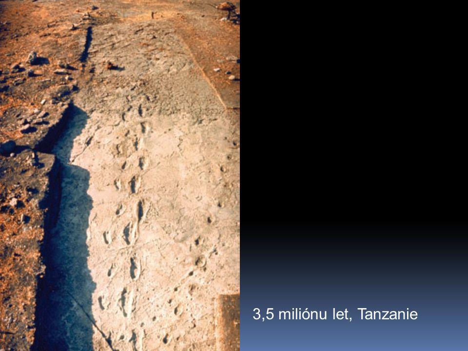 3,5 miliónu let, Tanzanie