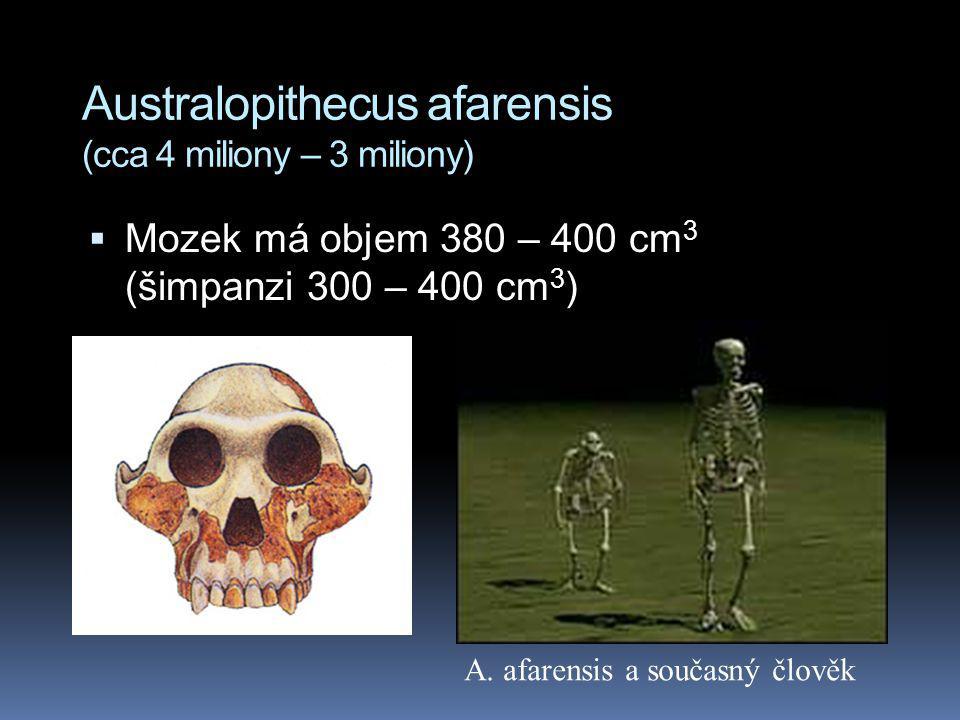 Australopithecus afarensis (cca 4 miliony – 3 miliony)