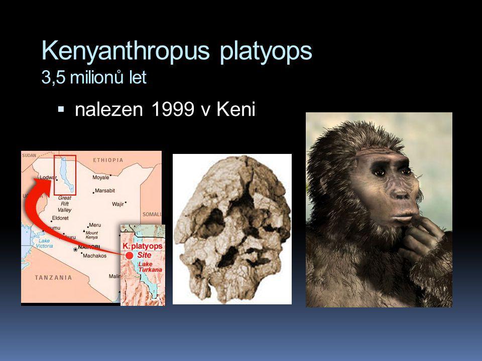 Kenyanthropus platyops 3,5 milionů let