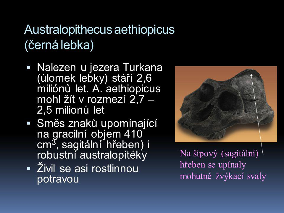 Australopithecus aethiopicus (černá lebka)