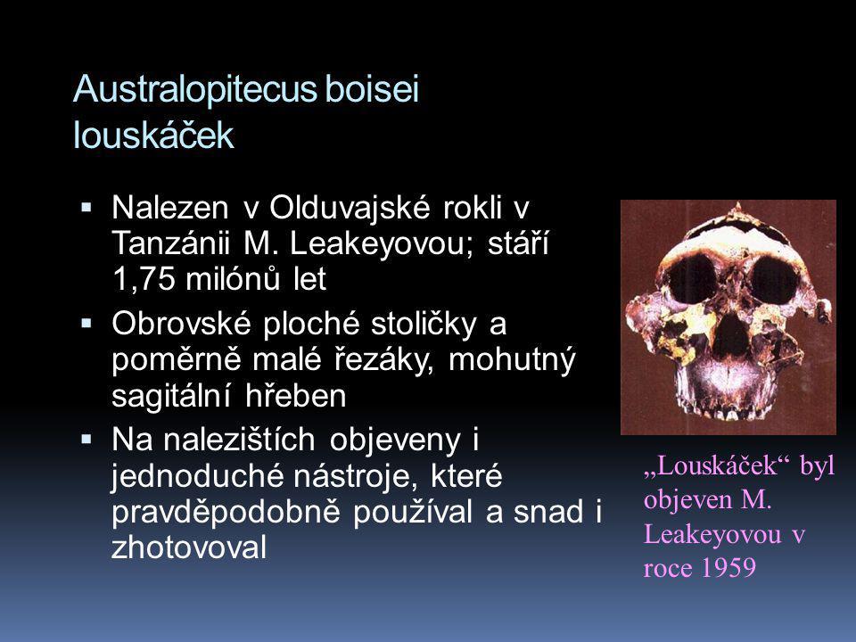 Australopitecus boisei louskáček