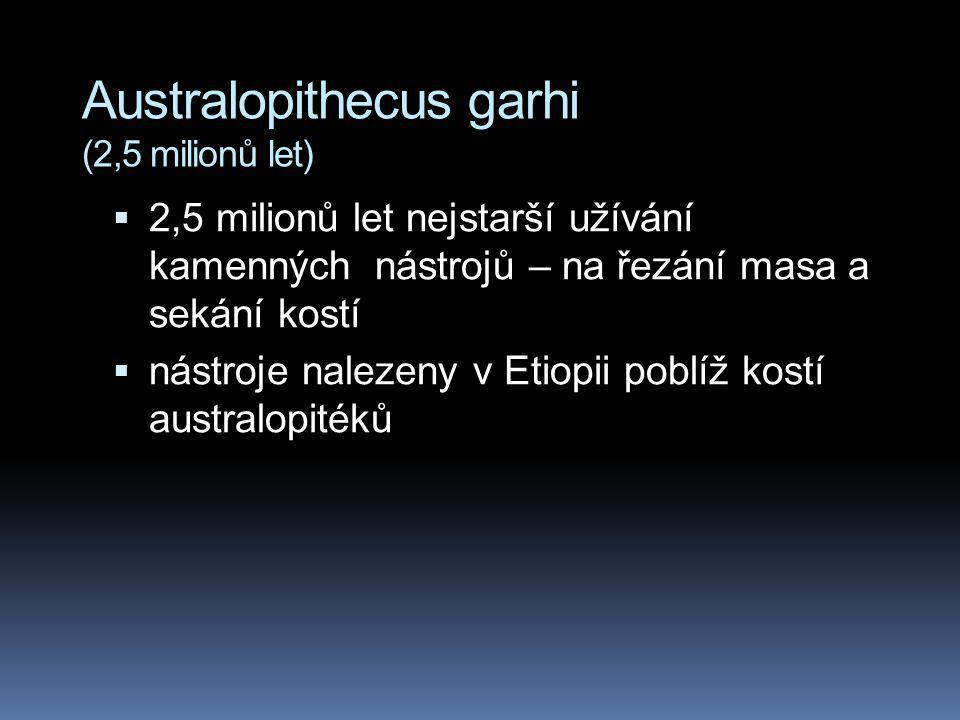 Australopithecus garhi (2,5 milionů let)
