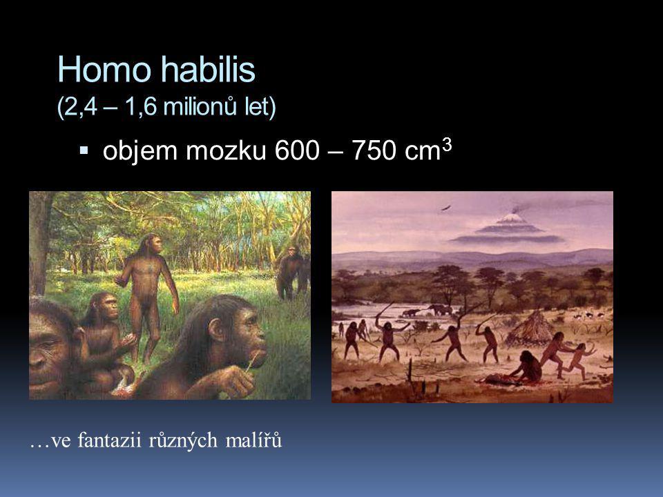 Homo habilis (2,4 – 1,6 milionů let)