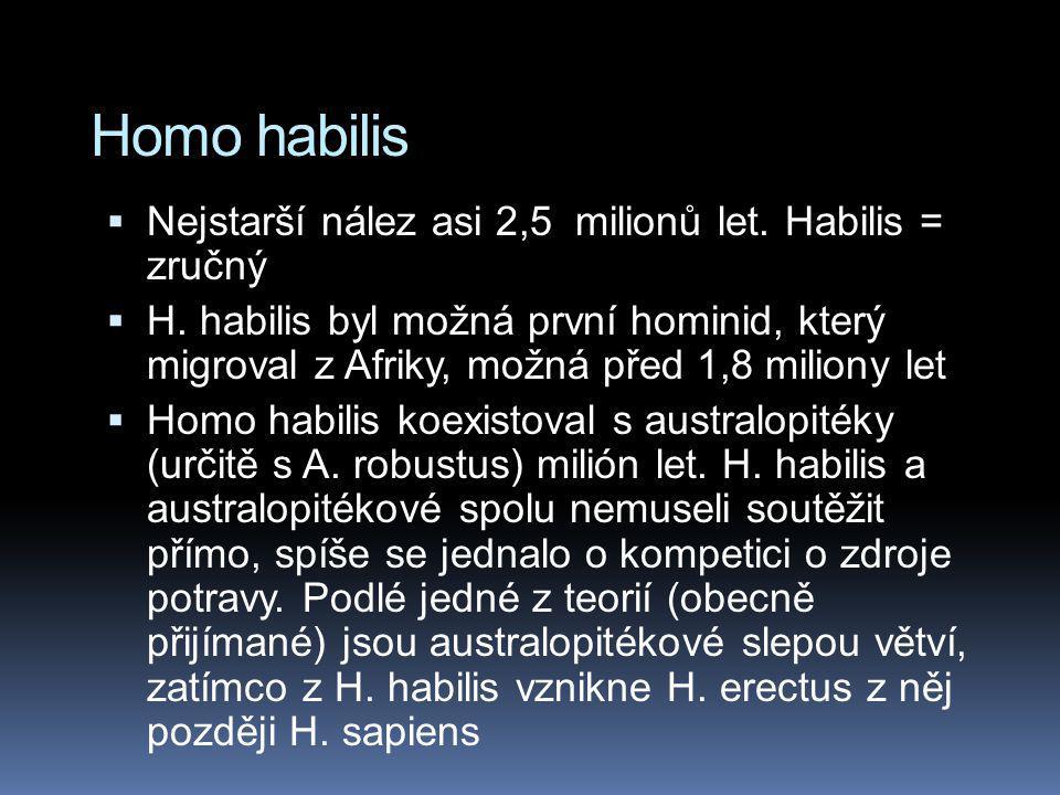 Homo habilis Nejstarší nález asi 2,5 milionů let. Habilis = zručný