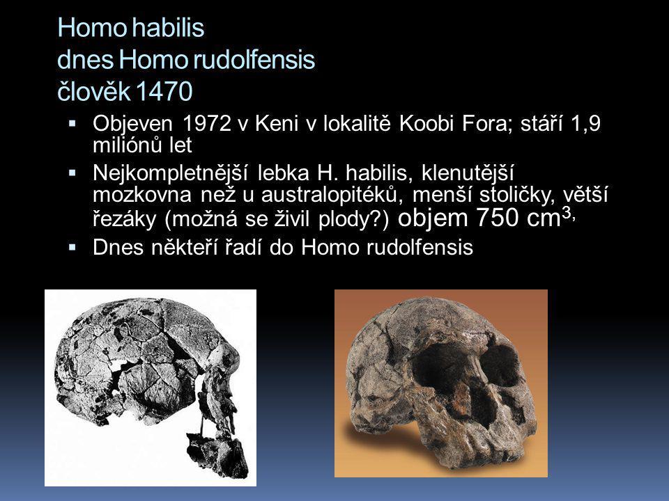 Homo habilis dnes Homo rudolfensis člověk 1470