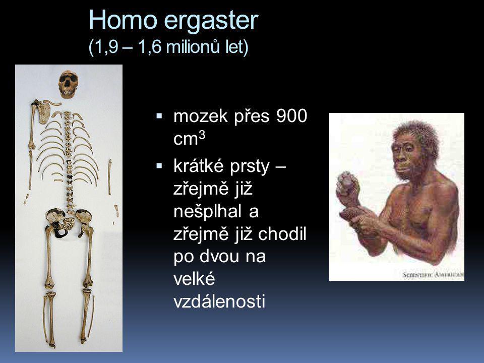 Homo ergaster (1,9 – 1,6 milionů let)