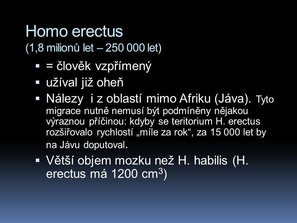 Homo erectus (1,8 milionů let – 250 000 let)