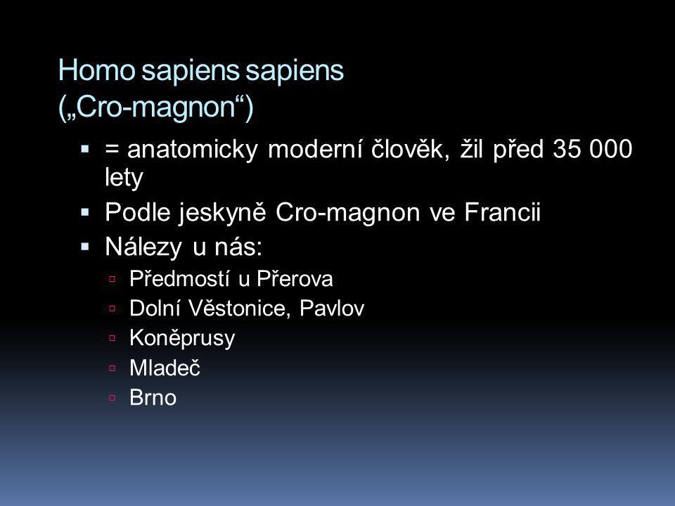 "Homo sapiens sapiens (""Cro-magnon )"