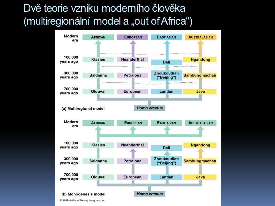 """Dvě teorie vzniku moderního člověka (multiregionální model a """"out of Africa )"""