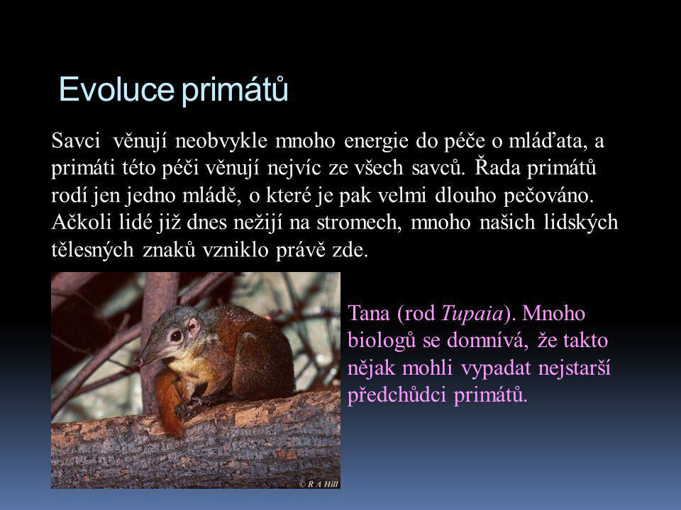 Evoluce primátů