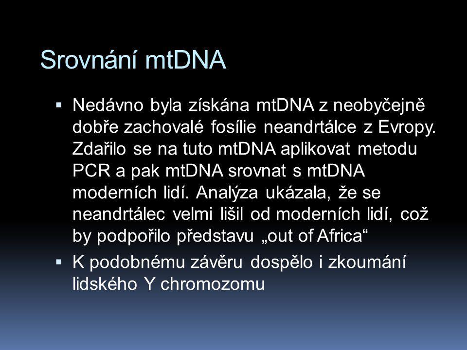 Srovnání mtDNA