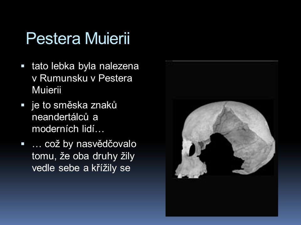 Pestera Muierii tato lebka byla nalezena v Rumunsku v Pestera Muierii
