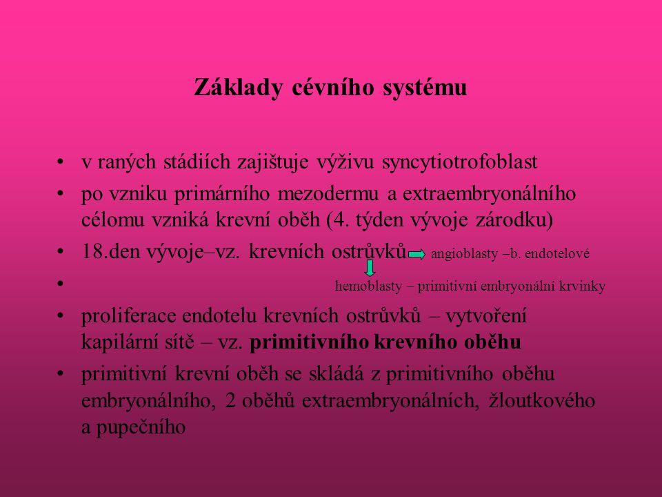 Základy cévního systému