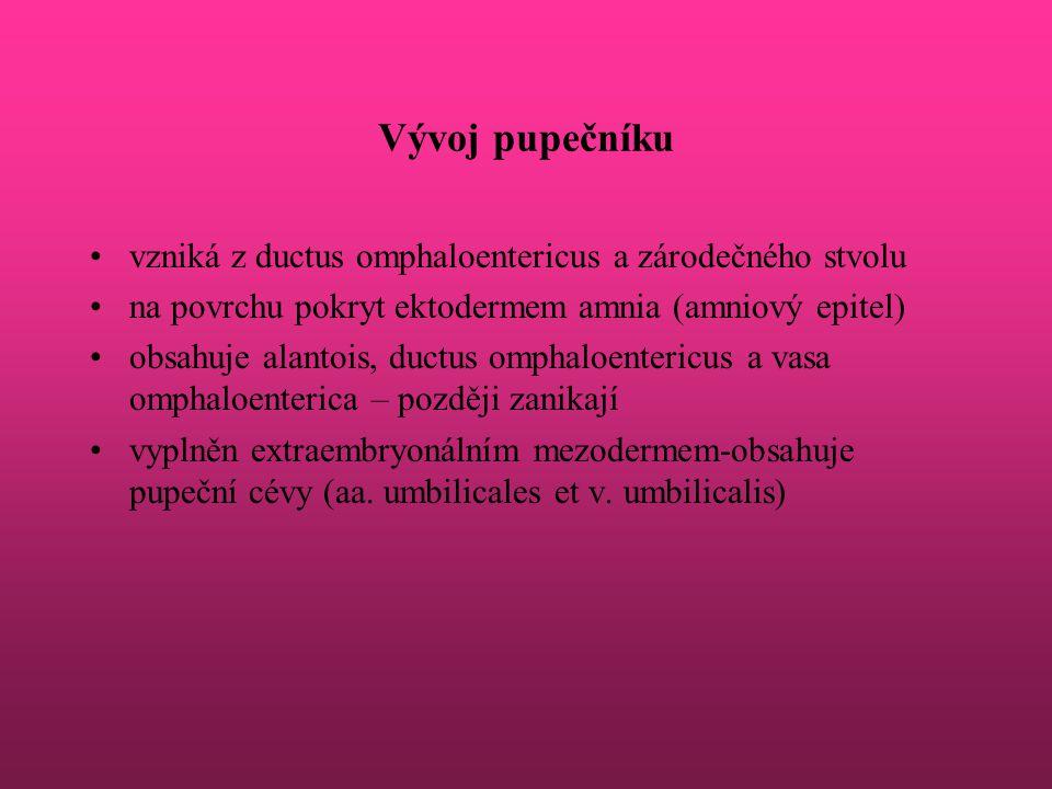Vývoj pupečníku vzniká z ductus omphaloentericus a zárodečného stvolu