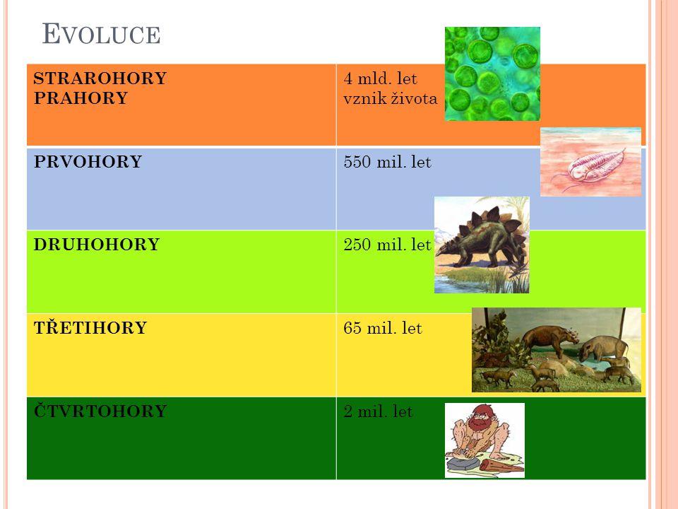 Evoluce STRAROHORY PRAHORY 4 mld. let vznik života PRVOHORY
